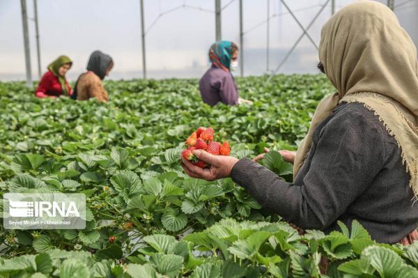 خبرنگاران نگاهی به کارنامه اقتصاد کشاورزی در قطب چهارم صنعت کشور